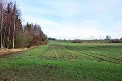 Landschaftsfelder im Herbst mit jungen Ernten Stockbild