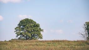 Landschaftsfelder im Herbst - Weinleseeffekt Lizenzfreies Stockfoto