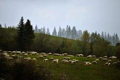 Landschaftsfelder im Vorfrühling Lizenzfreie Stockfotos