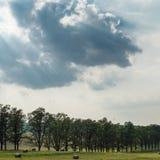 Landschaftsfelder im Vorfrühling Stockfoto
