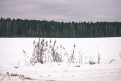 Landschaftsfelder im Winter - Weinleseeffekt Stockbild