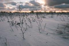 Landschaftsfelder im Winter - Weinleseeffekt Lizenzfreie Stockfotos