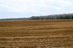 Landschaftsfelder, Länder mit Betten, Furchen für das Pflügen mit Ernten auf dem Hintergrund des Waldes Lizenzfreies Stockbild