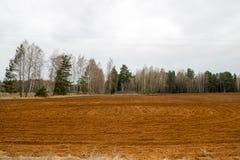 Landschaftsfelder, Länder mit Betten, Furchen für das Pflügen mit Ernten auf dem Hintergrund des Waldes Lizenzfreie Stockfotografie