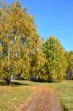 Landschaftsfrühherbst Ein Feld mit einem Schotterweg und einer goldenen Birke neben ihr, unter dem goldenen Herbstwald und dem bl Stockfotos
