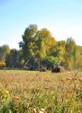 Landschaftsfrühherbst Feld mit Heuschobern auf einem Hintergrund des goldenen Herbstwaldes und des blauen Himmels Vor getrocknet Stockbilder