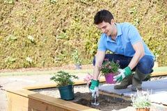 Landschaftsgärtner Planting Flower Bed im Garten Lizenzfreie Stockbilder