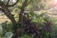 Landschaftsgestaltung im Hausgarten stockfoto
