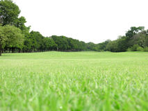 Landschaftsgrünes Gras Lizenzfreies Stockfoto