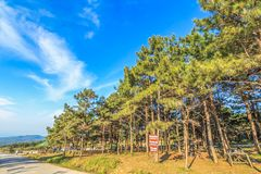 Landschaftshimmel mit Bäumen Lizenzfreie Stockbilder