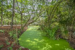 Landschaftshimmel mit Bäumen Stockfoto