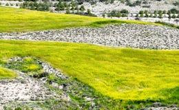 Landschaftshintergrund mit gelber Wiese Stockbilder