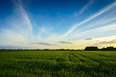 Landschaftslandschaft - Bauernhoffeld bei Sonnenuntergang Lizenzfreie Stockbilder