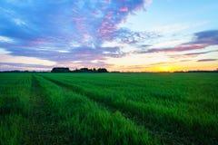 Landschaftslandschaft - Bauernhoffeld nach Sonnenuntergang Stockfotografie