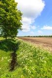 Landschaftslandschaft mit Abzugsgraben und bebautem Bauernhoffeld Stockbild