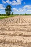 Landschaftslandschaft mit Abzugsgraben und bebautem Bauernhoffeld Lizenzfreie Stockbilder