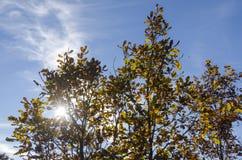 Landschaftslandschaft mit Birken Stockfoto