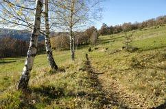 Landschaftslandschaft mit Birken Lizenzfreies Stockbild