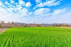 Landschaftslandschaft mit grünem Reisfeld im Sonnenaufgang und in der Wolke Stockfoto
