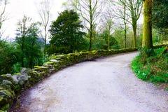 Landschaftslandschafts-Waldgehende Weise stockfotos