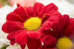 Landschaftsnaturblumen Stockfoto