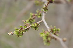 Landschaftsnaturblumen Lizenzfreies Stockbild
