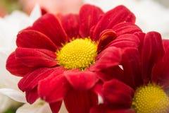 Landschaftsnaturblumen Stockbilder