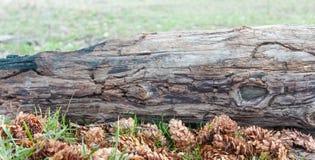 Landschaftsnaturblumen Stockfotografie