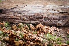 Landschaftsnaturblumen Lizenzfreie Stockbilder