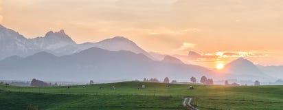 Landschaftspanorama mit Kühen Stockbilder