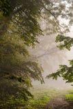 Landschaftspark am nebelhaften Morgen Lizenzfreies Stockfoto