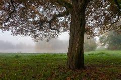 Landschaftspark am nebelhaften Morgen Lizenzfreies Stockbild