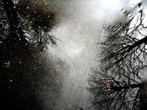 Landschaftsreflexion von Bäumen auf der Pflasterung Lizenzfreie Stockbilder