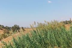 Landschaftsschöne Anlage stockbilder