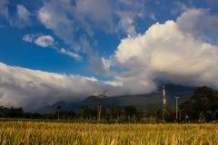 Landschaftsschöner Berg mit padi Feld Stockfoto