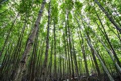 Landschaftsschutzgebiet und Wald Lizenzfreie Stockfotografie