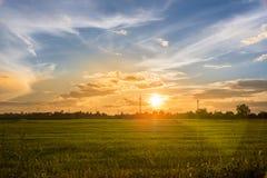 Landschaftssonnenuntergang auf Reisfeld mit schönem blauem Himmel und Wolken Stockfotografie