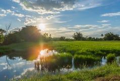Landschaftssonnenuntergang auf Reisfeld mit schöner blauer Himmel- und Wolkenreflexion im Wasser Lizenzfreie Stockfotos