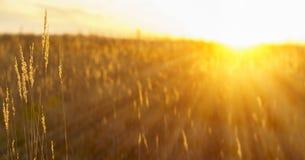 Landschaftssonnenuntergang - Sonnendurchbruch Stockbild