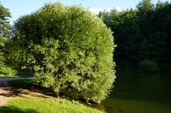 Landschaftsstadt-Sommer Park mit einem großen See stockfotos