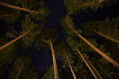 Landschaftsstern und -sonnenaufgang am Berg Lizenzfreie Stockfotografie