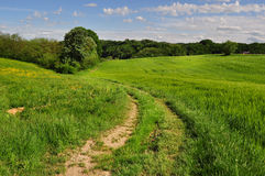Landschaftsstraße durch die Felder Lizenzfreie Stockfotografie