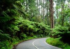 Landschaftsstraße im Frühjahr Lizenzfreies Stockfoto