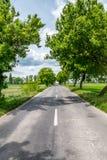 Landschaftsstraße zwischen Bäumen stockbilder