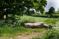 Landschaftsszene, die über dem Feld durch einen gefallenen Baumklotz schaut Lizenzfreie Stockbilder