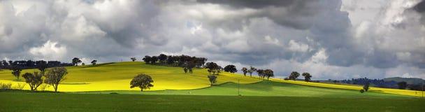 Landschaftsunnyside Cowra canola-Ansichten Lizenzfreies Stockfoto