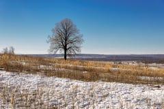 Landschaftsvorfrühling an einem sonnigen Tag Lizenzfreie Stockbilder