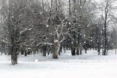 Landschaftswinter-Parkbäume Lizenzfreies Stockbild
