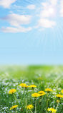 Landschaftwity gelbe und blaue Blumen Stockbilder