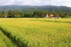 Landschap με τους τομείς ρυζιού, γεωργικές βιομηχανίες στη Lovina, Μπαλί, Ινδονησία Στοκ φωτογραφίες με δικαίωμα ελεύθερης χρήσης
